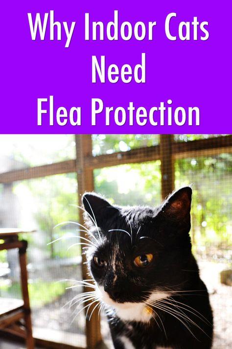 Yep Indoor Cats Need Flea Protection Too Spon Categocat Indoor Cat