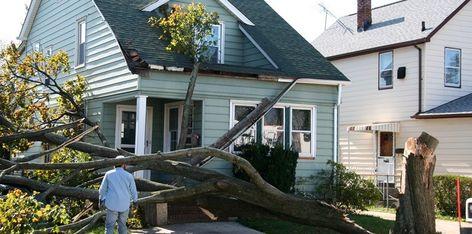 Arborwise Tree Llc Has Many Years Of Experience In Emergency