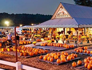 Christmas Tree Farm Virginia Beach Ideas In 2020 Christmas Tree Farm Pumpkin Farm Tree Farms