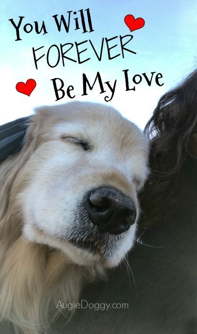 You Will Forever Be My Love Quote Goldenretriever Puppy Quotes Dog Quotes Love Dogs Golden Retriever