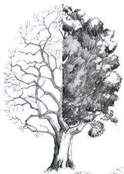 Worksheet. Como dibujar paisaje a lapiz dibujo a lapiz de paisajes tutorial