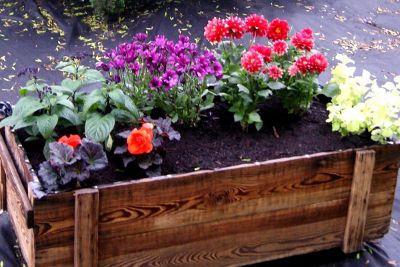 Drewniana Skrzynka Na Kwiaty Jak Zrobic Co Posadzic W Skrzynce Plants