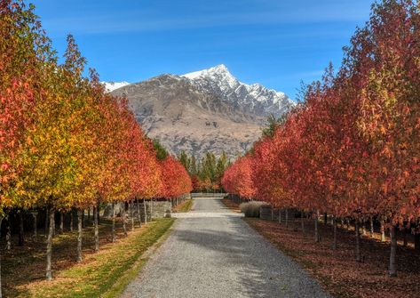 Here's a view from my daily walk here in Queenstown yesterday. I try to pick slightly different routes each time to make some new local discoveries. If you watch my silly Instagram stories, then you already know this...  Also thanks for the feedback on my fourth COVID video. The last one was about Living Alone/Suicide and the others have been on Despair, Anxiety, and Conspiracy Theories... those are all on my YouTube or Facebook if you wanna watch. 🙂 #TreyRatcliff #Lockdown #MentalWellbeing