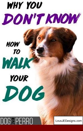 How To Potty Train An Older Dog In An Apartment Easy 13 Step