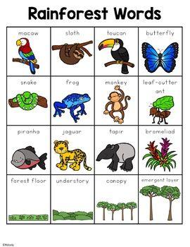 Rainforest Words In 2020 Rainforest Activities Rainforest Classroom
