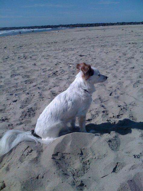 Oregon Coast is Pet Friendly!