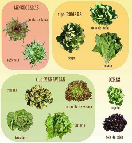 Tipos Lechuga Tipos De Lechuga Cultivo De Plantas Huerto