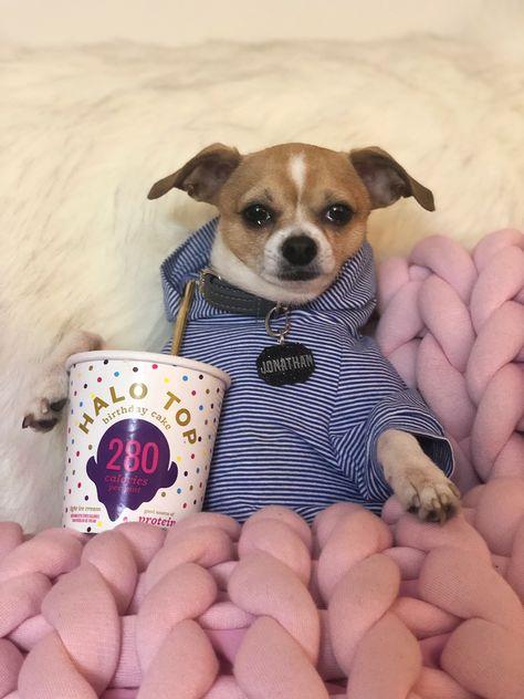 Magnificent Jonathan Warren Nyc Socialite Pup With His Birthday Cake Halo Funny Birthday Cards Online Inifodamsfinfo