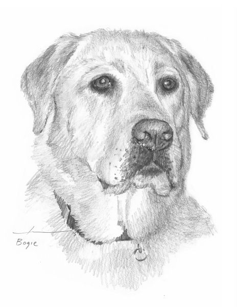 Http Miketheuer Com This 11x14 Drawing Of A Yellow Labrador