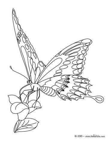 Go Green And Color Online This Monarch Butterfly Coloring Page