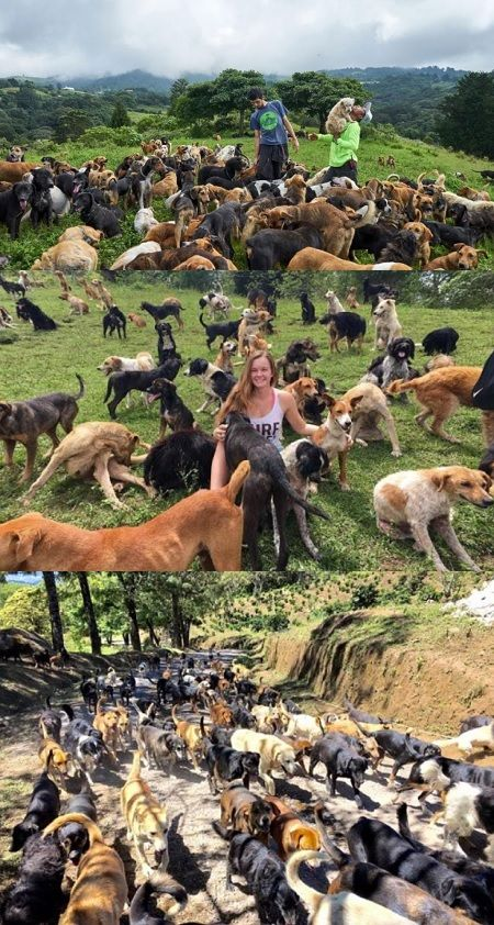 You Can Run Around A Costa Rican Field With 900 Dogs Video Cute