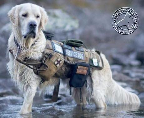 Heavy Duty Tactical Dog Vest Leash Dog Vest Tactical Dog Gear