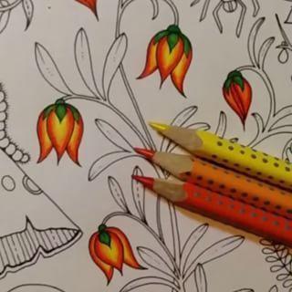446 Best Secret Garden Colouring Images On Pinterest