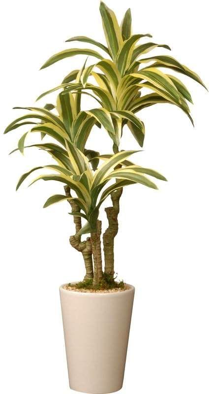 4/'h x 2/'d Green Silk 4-foot Potted Corn Stalk Dracaena Plant