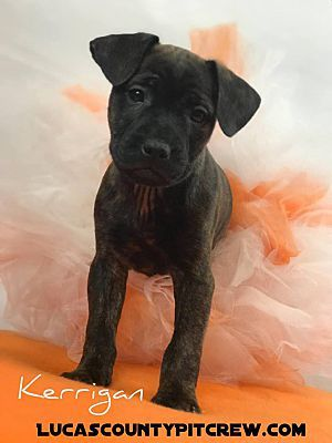 Craigslist Ohio Pets Toledo - DECRAIGS