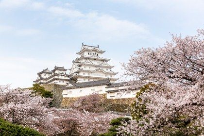 The Best Places To See Cherry Blossoms In Japan Cherry Blossom Japan Places To See Yoyogi Park