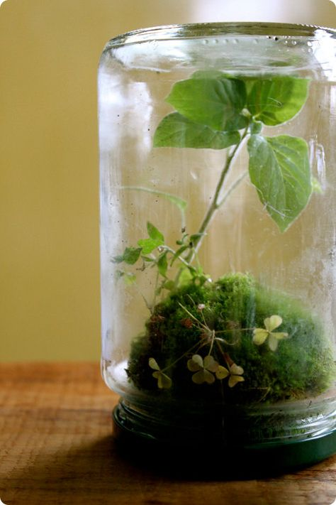 Miniterrarium Marmeladenglas Anlegen Auf Kopf Gestellt Moos Bonsai