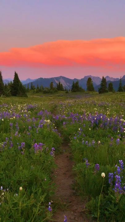 TheSuburbs.org | Unbelievably Beautiful Sunset Flower Field With Snowy Mountain Backdrop