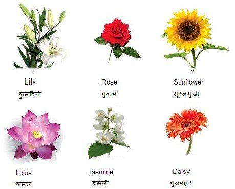 Flowers Name In Hindi And English फ ल क न म List And 459x369 Jpeg Flower Names Beautiful Flower Names Flowers Name In Hindi