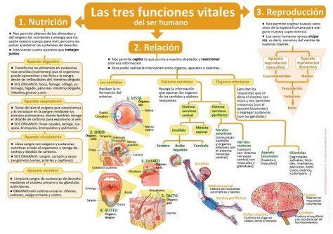 Infografías De Ciencias Naturales Ciencias Naturales Ciencias De La Naturaleza Funciones De Nutricion