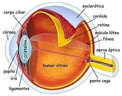 Pin Em Anatomia