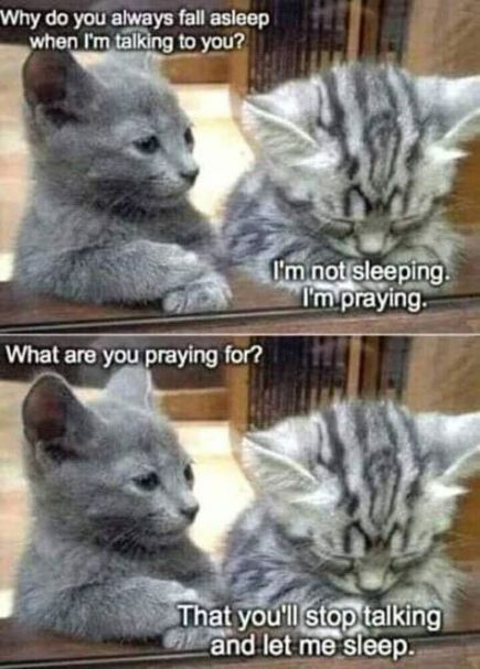 28 Trendy Cats Funny Quotes Truths Kittens Cat Quotes Funny Caturday Funny Kittens Funny