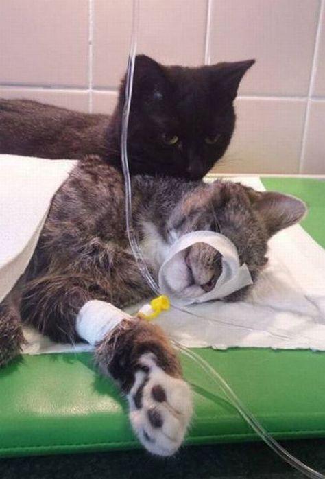 Nurse cat
