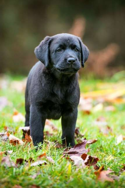 Dogs Names Female Black 20 Ideas Dogs Black Dog Names Puppy Names Dog Names