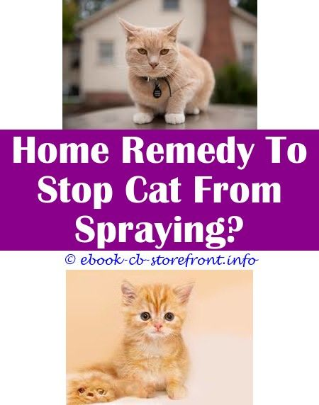 4 Astute Tricks How To Prevent A Stray Cat From Spraying Do Cats Stop Spraying After Being Neutered How To Stop Male Cats From Spra Cats Male Cat Spraying Cat Fleas