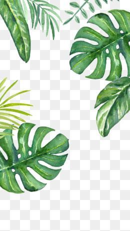 Watercolor Leaves Watercolor Clipart Cartoon Hand Painted Png