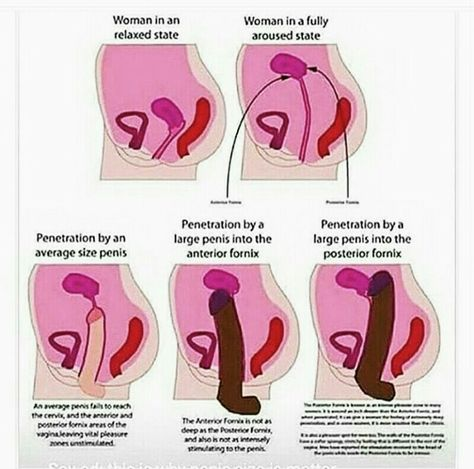 57 Best Know More About Reproduction Images Health Massage Anatomy
