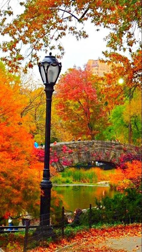 Herbst im Central Park tjn Mehr - Amanda Masters - Natur - Travel Fall Pictures, Fall Photos, Nature Pictures, Beautiful Places, Beautiful Pictures, Beautiful Gorgeous, Beautiful Scenery, Central Park Nyc, Autumn Scenes