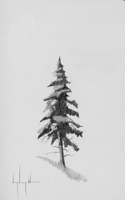 Pine Tree Pencil Drawing : pencil, drawing, Drawing, Ideas, Drawing,