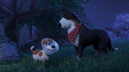 Film Review The Secret Life Of Pets 2 Secret Life Of Pets