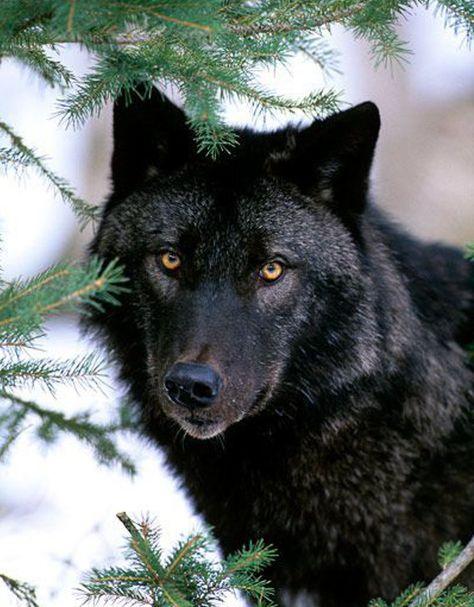 JeffryG Gruppo di lupo disegno con effetti oscuri in difficolt/à creature selvatiche Husky Artigianale 2pcs Variet/à Multifunzionale Copricapo Asciugamano Foulard