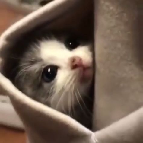 Oh my god,it is socute😭  #cat #cats #lovelycats#lovemycat  #funny #funnycats #funnyvideos #cutecats