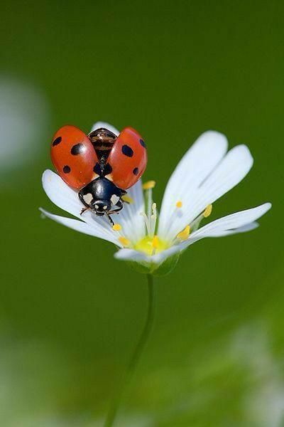Pin By Jenny Black On Ladybugs With Images Ladybird Bugs And
