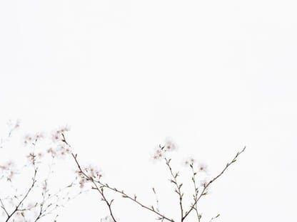 18 Wallpaper Warna Putih Hd White Wallpapers Free Hd Download 500 Hq Unsplash Gambar Batik Warna Hitam Putih 204 Hitam Dan Putih Bunga Putih Fotografi Warna