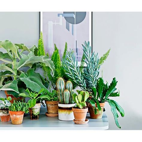 Instil a feeling of serenity in your home with a plethora of plants! Get inspired by our guide to indoor plants to mix and match pots, palms and hanging plants.