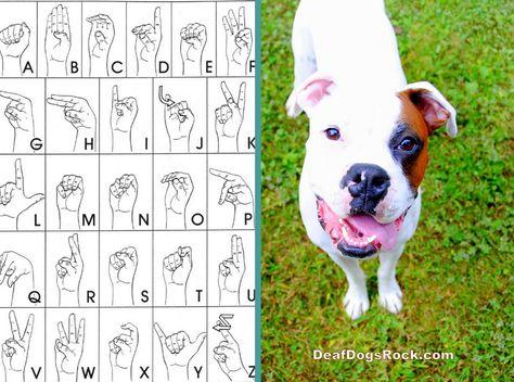 Deaf Dogs Beginning Sign Training Chart From Deafdogsrock Com