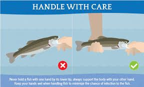 How To Unhook A Fish Fishing Techniques Survival Fishing Fish