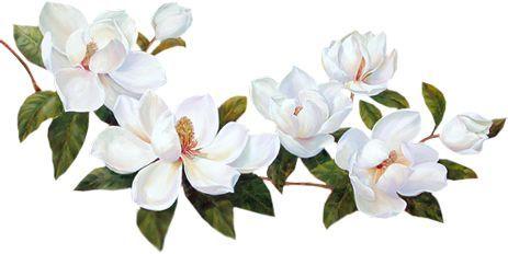 22 Ideas Flowers Tattoo Vintage Magnolia Transparent Flowers Small Flower Tattoos Flower Painting