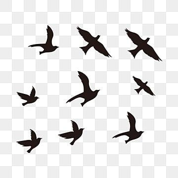 Black Flying Bird Silhouette Bird Fly Silhouette Png And Vector With Transparent Background For Free Download Flying Bird Silhouette Bird Silhouette Black Bird