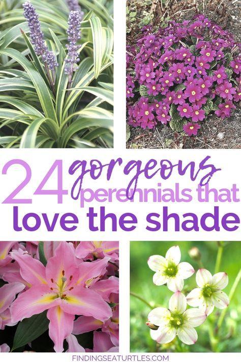 24 Spectacular Shade Garden Perennials Shade Garden Plants