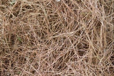 7daad50f3eaa4abd6b3a01bbecc9c6ef - Are Pine Needles Good For Gardens