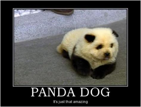 Panda Humor Panda Dog Funny Pictures Best Jokes Comics Images Video Humor Panda Hund Pandas Und Hunde