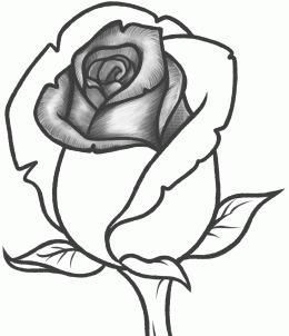 Then You Work Outward Roses Drawing Flower Drawing Tutorials Flower Sketches