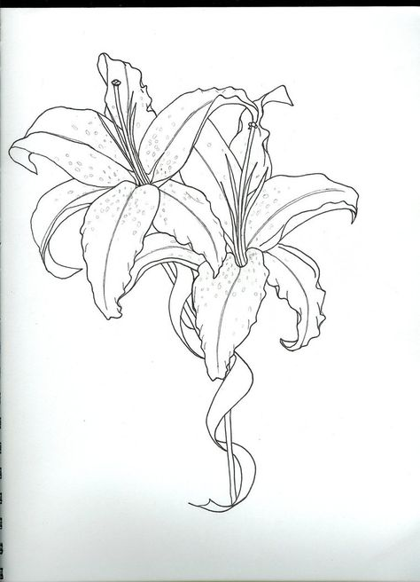 List Of Pinterest Lily Tattoo Sketch Posts Images Lily Tattoo