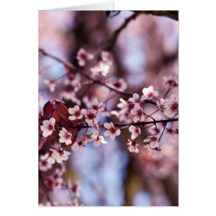 Japanese Cherry Blossom Tree Plant Love Botanical Card Floral Gifts Flower Flowers Gift Ideas Trees To Plant Cherry Blossom Wedding Japanese Cherry Blossom