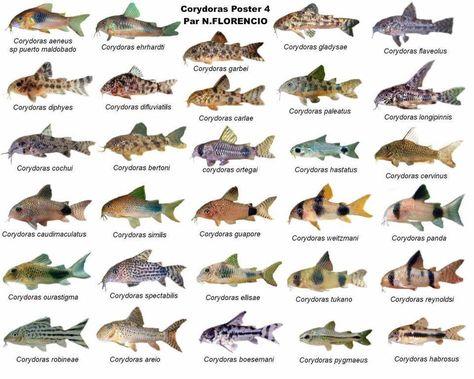 110 best fish tanks images on Pinterest | Fish aquariums, Fish tanks ...
